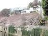 Kandagawa_20060325