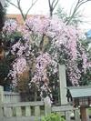Nogi_20060325