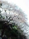Zenkei_20060326
